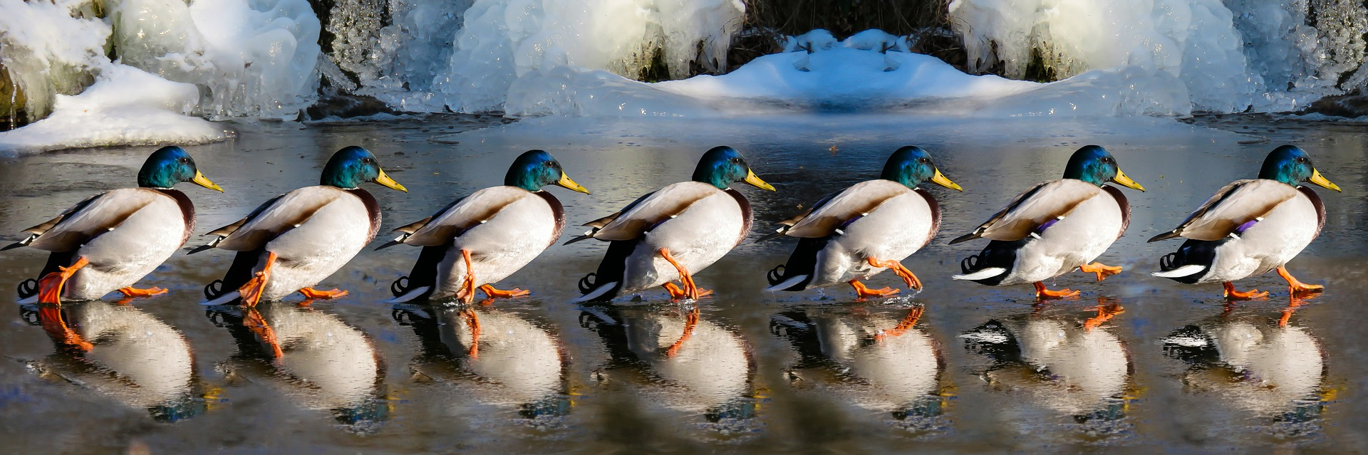 It's all about getting your ducks in a row!